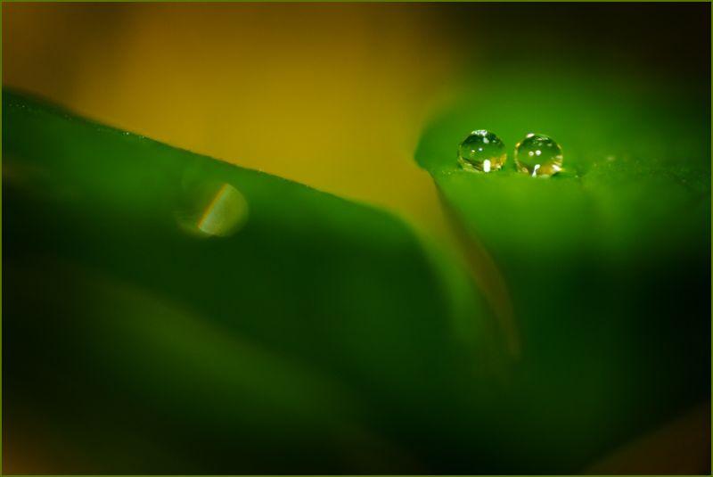 Waterdrops Nikon Macro