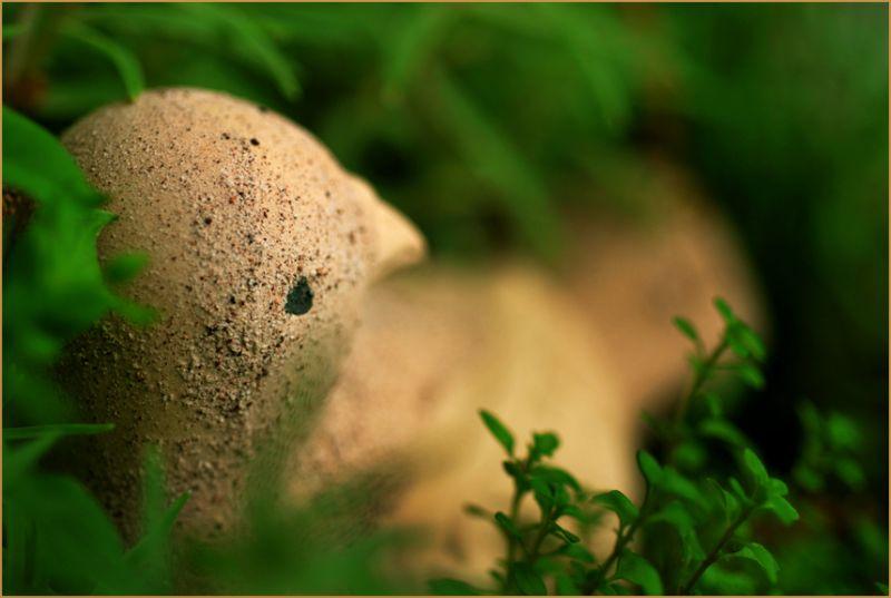 Clay Bird in Thyme