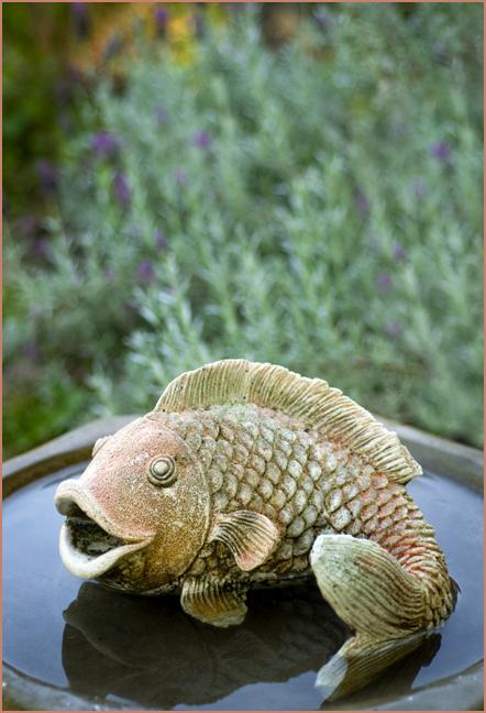 BirdBath Fish