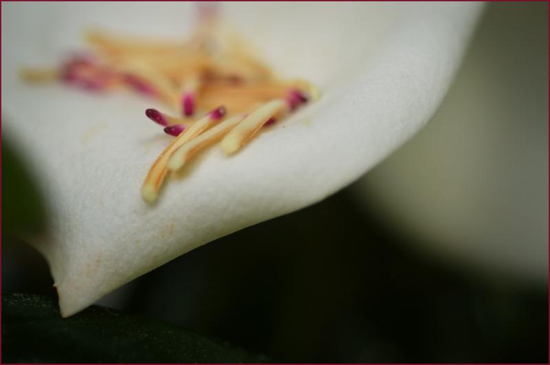Magnolia Matchsticks