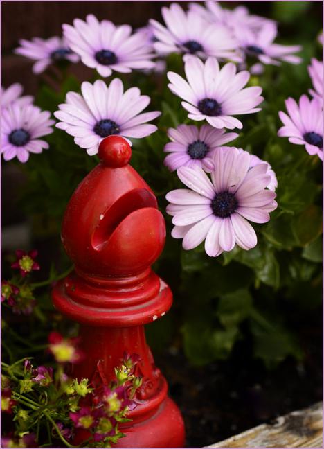 Red Bishop in the Garden