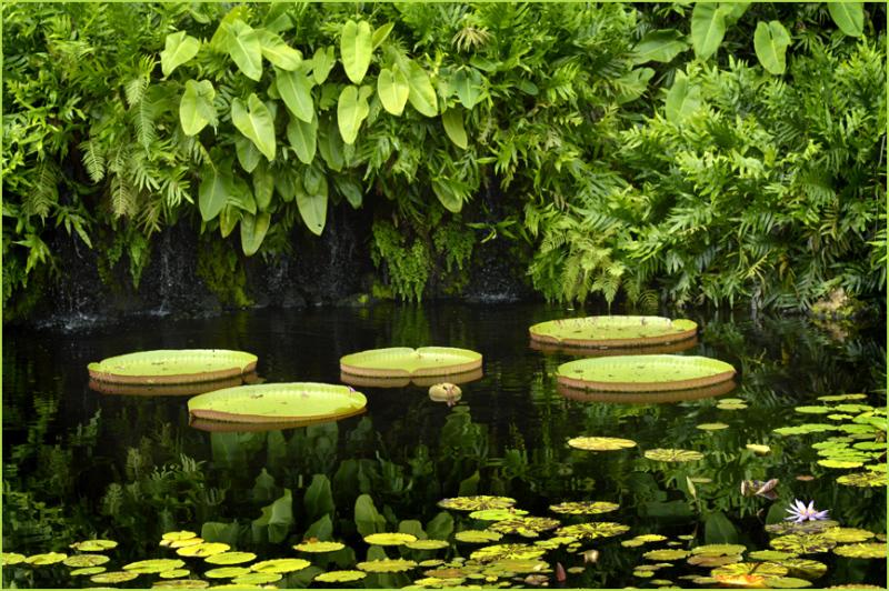 Pond at Fairchild Botanical Garden