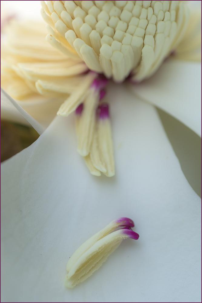 Magnolia Bloom Matchsticks