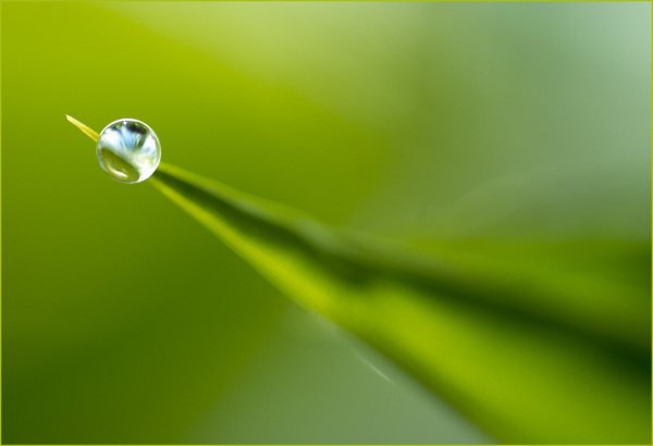 Raindrop on Bamboo Leaf