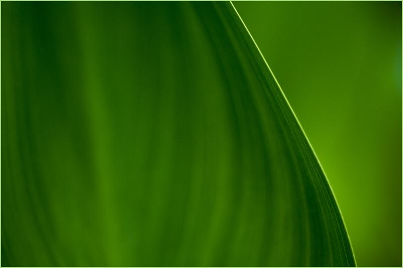 Edge of a leaf