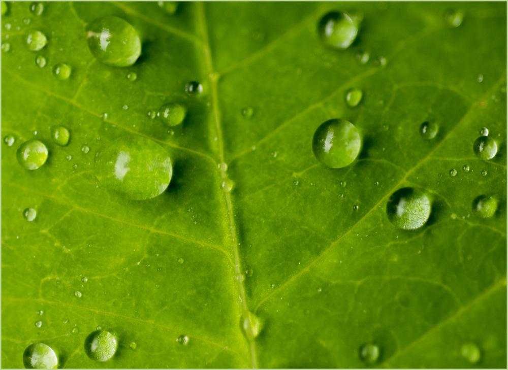 Water Drops Nikon Macro