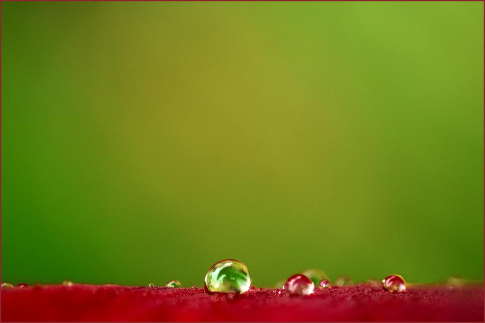 Raindrops on Dark Red Gladiola Nikon Macro
