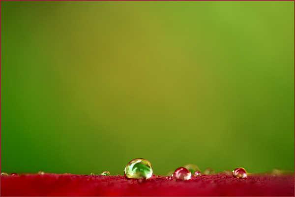 Raindrops on Dark Red Gladiola Nikon Macro
