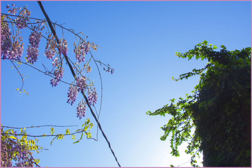 Wisterisa, Power Lines and Ivy Covered Chimney