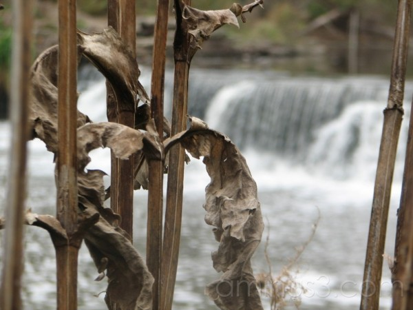 Dead leaves by a waterfall