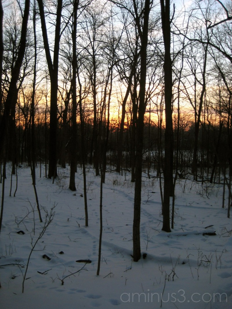 Sunset through the Winter Forest
