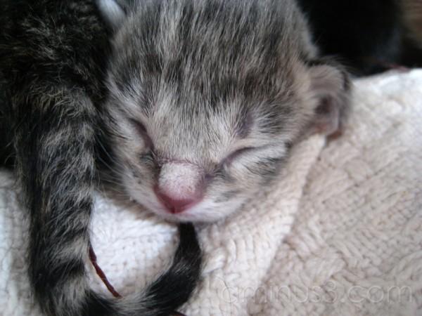 cute litle kitten