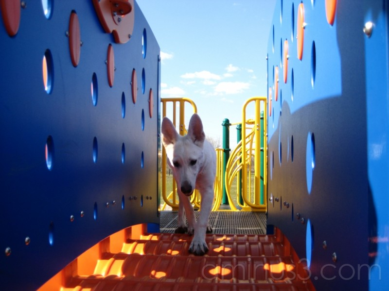 Veda playing on playground
