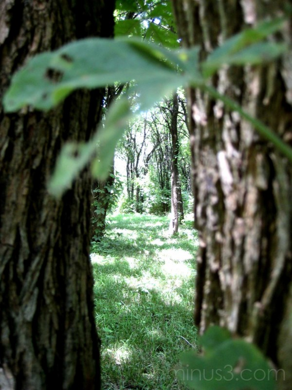 fairy tale trees canopy green in between