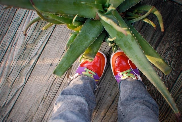 shoes and aloe on porch