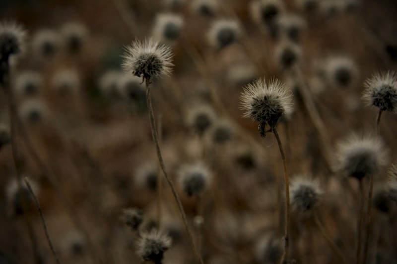 Gone to seed…