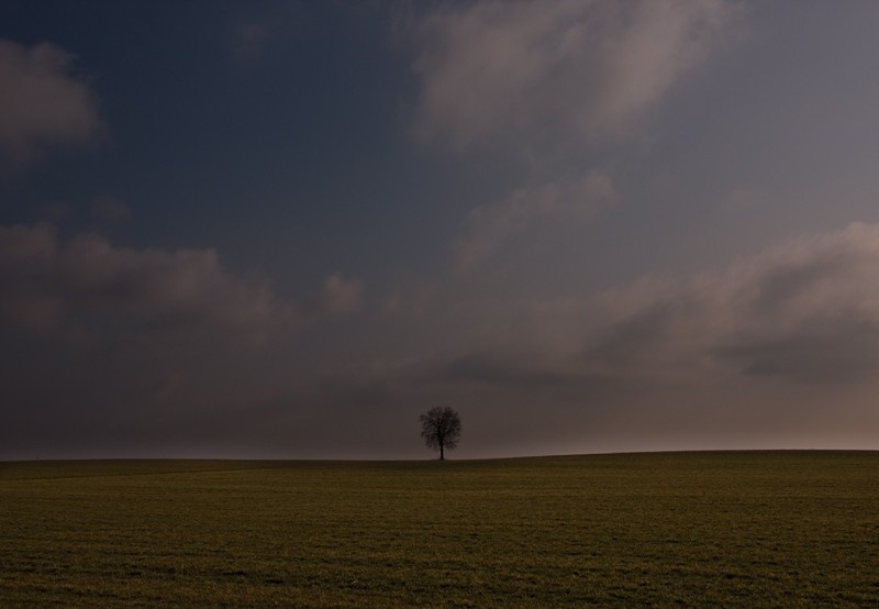 Lonely Tree II