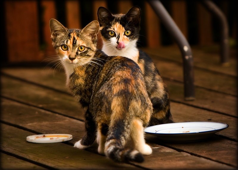 Kittens on the deck