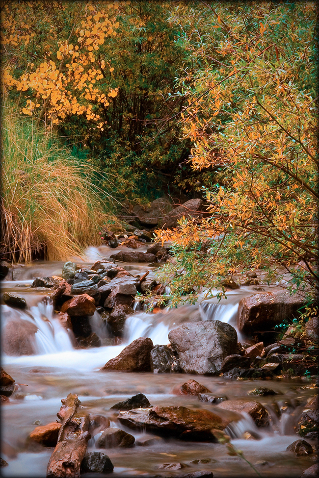 Golden aspens along a mountain stream