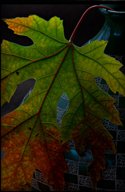 Autumn color still life