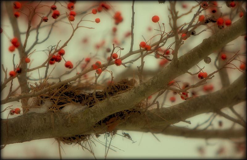 Winter scenes i
