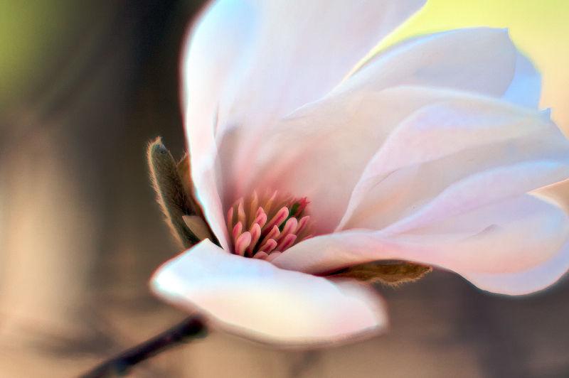 Nature's blush ...