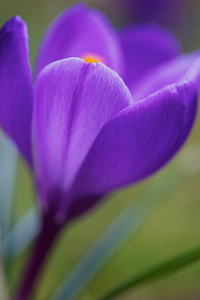 The color purple ...