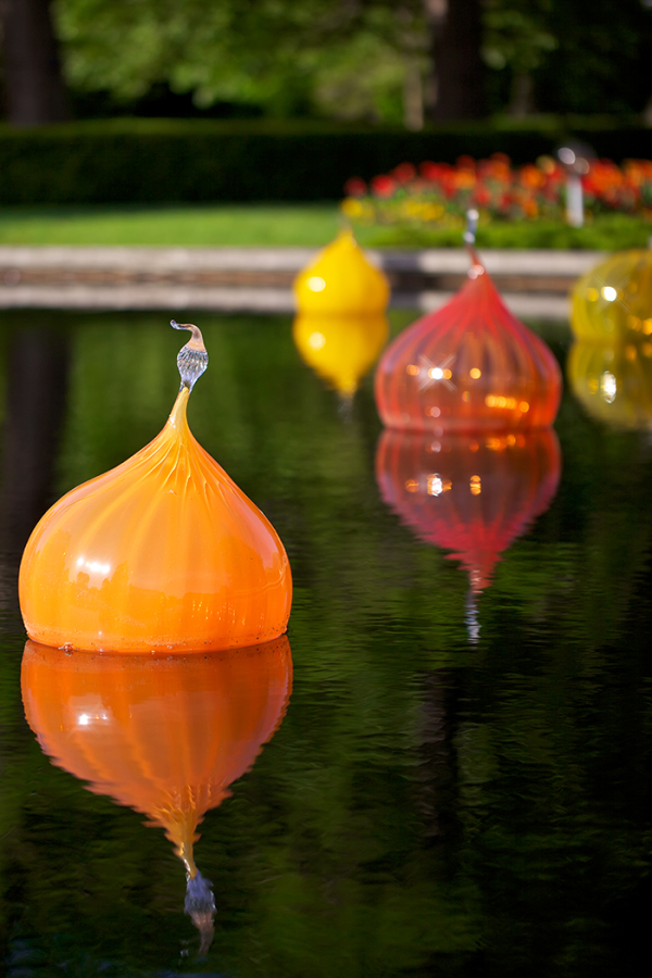 Chihuly onions ...