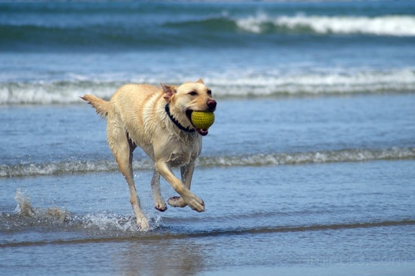 Oregon, Newport, coast, beach, ocean, dog, surf