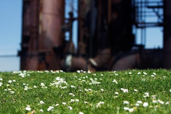 Gasworks Grass