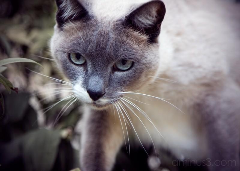 Neighbor kitty again