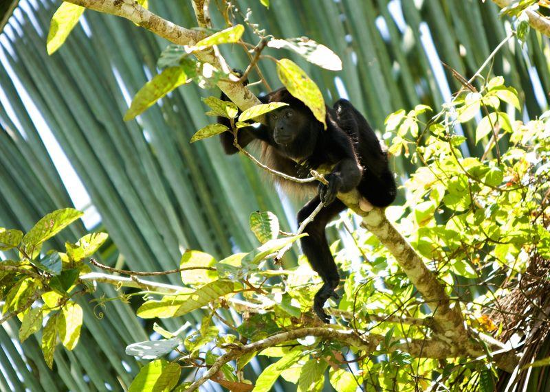 Monkey No. 2
