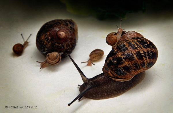 Snails Update