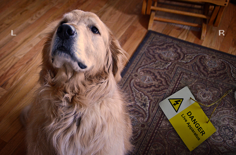 [i][b]Lilly[/b] :  Some new Law here says my dog has to wear a big ID tag when on the street.[/i]