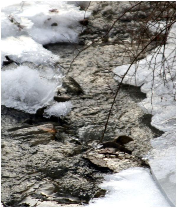 Stream on ice