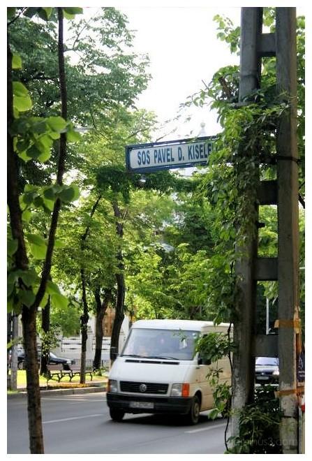 Kiseleff Street