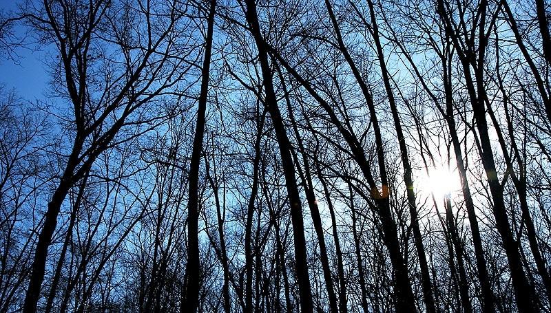 sun shining through winter trees