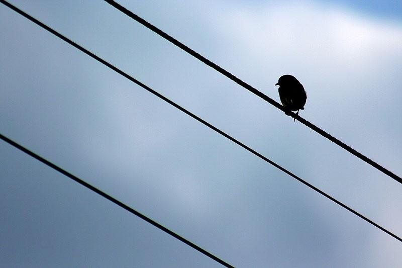 bird sitting on a wire