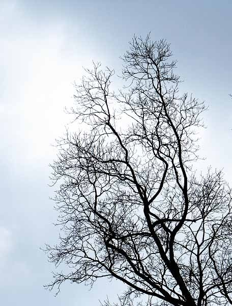 winter tree against cloudy sky