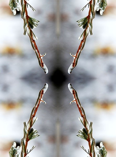 frozen branch in a symmetrical design