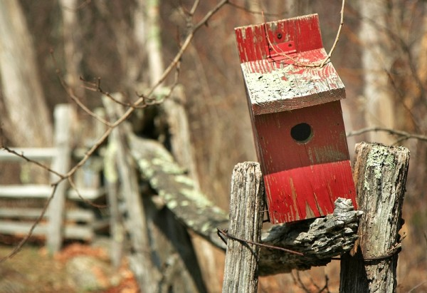 red bird house on a fence