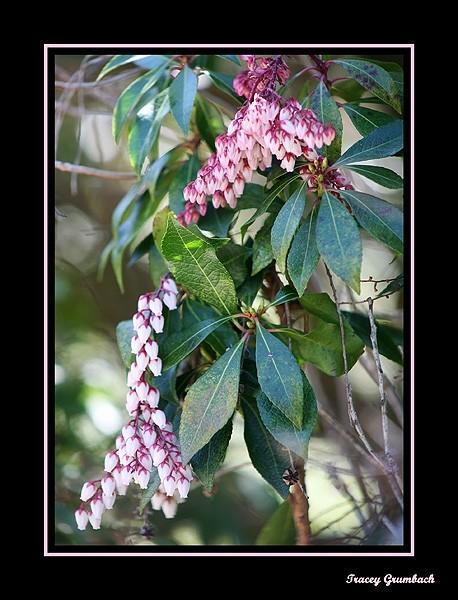 blooming spring bush