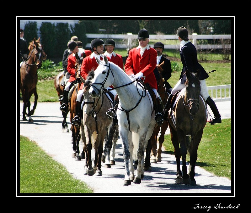 horses and hounds heading out on a fox hunt