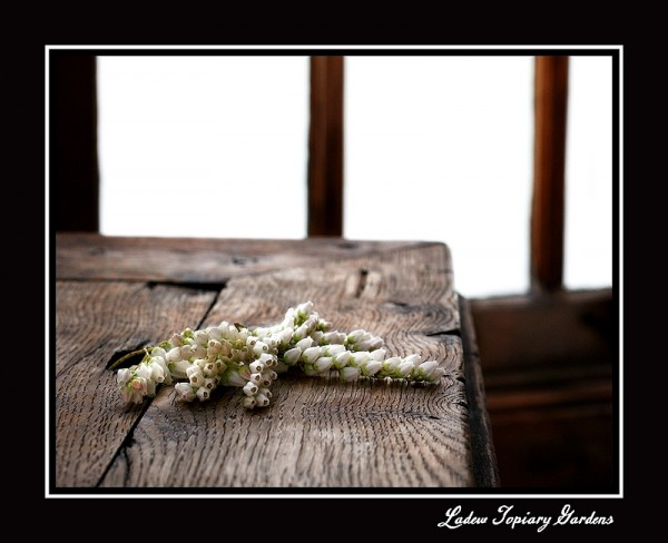 a bloom laying on an antique table