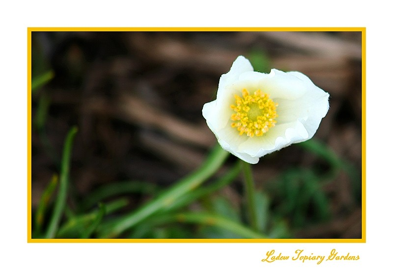 color photo of a yellow and white flower