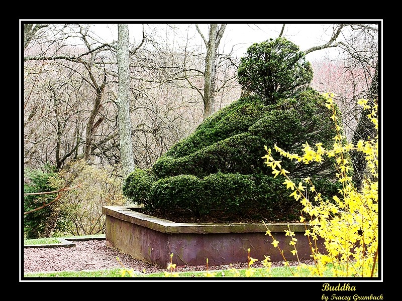 color photo of a buddha topiary