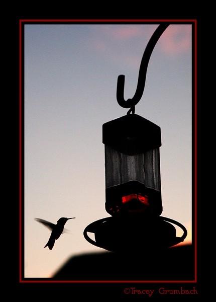 hummingbird at feeder midflight at dusk