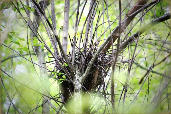 nest in a tree