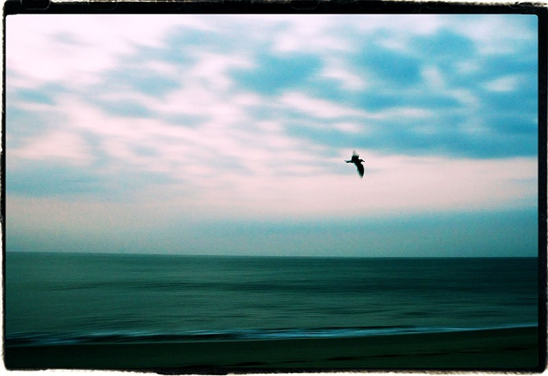 seagul flying at dawn at the beach