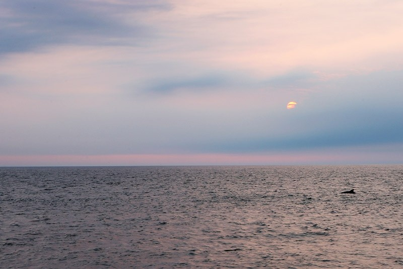dolphin surfacing in the ocean at sunrise